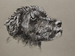 This dog is a Bouvier. 9 x 12 black and white ink on gray toned Strathmore paper