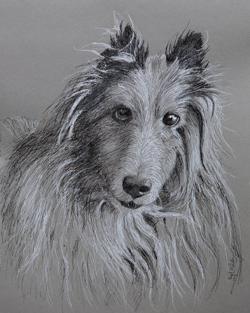 My brother sent me a picture of his dog Honey Bear. It was a lot of fun to draw. 11 x 14 ink on gray toned Strathmore paper