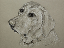 Commisioned portrait of Mogul the therapy dog. 11 x 14 ink on gray toned Strathmore paper. SOLD